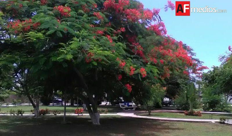 Proyectan jardín del arte en Salagua