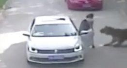 Mujer muere tras ataque de tigre en China