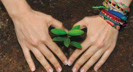 6.5 millones para restaurar 500 hectáreas de zona forestada en Manzanillo
