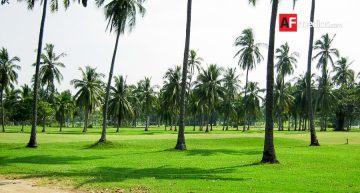 Seder busca repoblar algunas zonas del estado con palma de coco