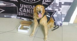 Binomio de la unidad canina especializada localiza cartuchos en paquetería