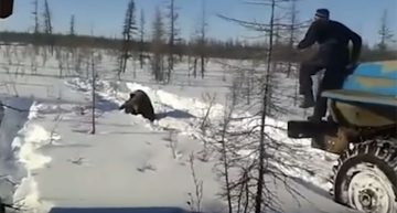 Rusia investiga asesinato de un oso captado en video