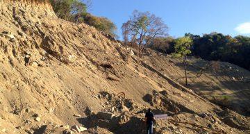 Profepa clausura predio por cambio de uso de suelo en Jalipa