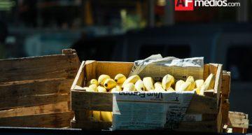 Colima entre los cinco principales productores de plátano