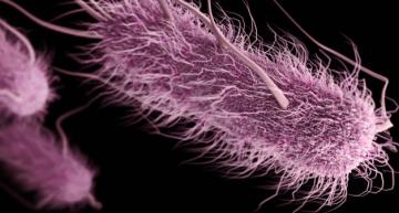 OMS previene de algunas bacterias que necesitan nuevos antibióticos