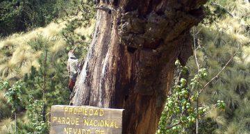 Disfrutar del Parque Nacional Nevado de Colima sin nieve: Patronato