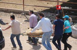 Bomberos de Zapopan atraparon a un león que se escapó de un rancho