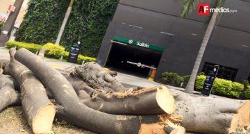 Ayuntamiento de Colima retira árbol por riesgo