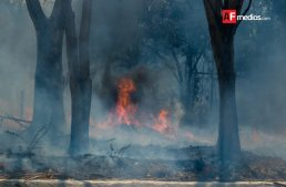 En 2017 van 515 hectáreas afectadas por incendios en Colima