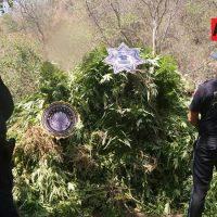 Policía Federal destruye 15 toneladas de marihuana en Tuxpan, Jalisco - AFmedios