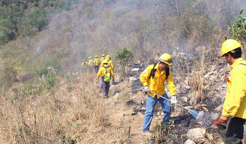 Reportan 14 incendios forestales en Sonora