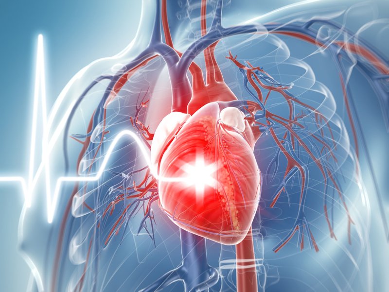 d356fb7c3d1d9 Día Mundial del Corazón  en México mueren 121 mil por causas ...