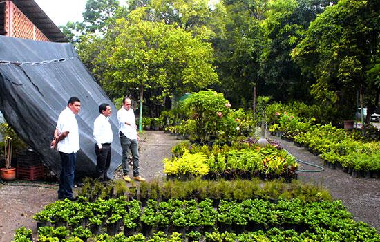 Vivero municipal de villa de lvarez produce 8 mil plantas for Viveros en colima